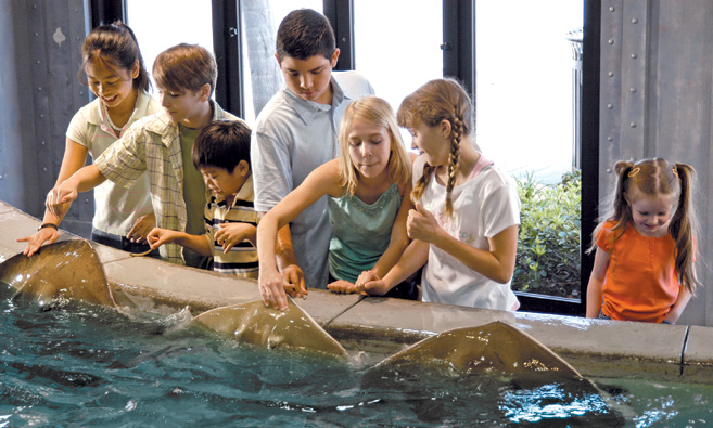 Petting stingrays at the aquarium