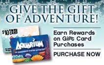 Aquarium restaurant nashville coupons