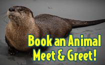 Book an animal Meet & Greet