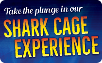 Take a plunge in our shark cage!