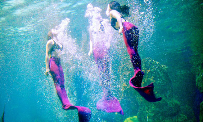 Three mermaids swimming in the aquarium
