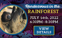 Rendezvous in the Rainforest Dinner on July 27 from 6:30pm to 8:30pm. Click to Buy Tickets Now.
