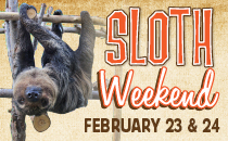 Hang out with us as we celebrate all things SLOTH