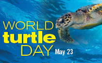 World turtle Day May 25th 2019