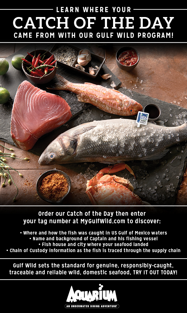 Gulf Wild Catch of the Day Promo